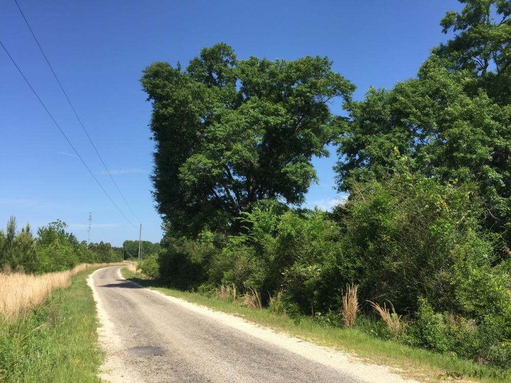 Carson Investment Property in Jefferson Davis County, MS