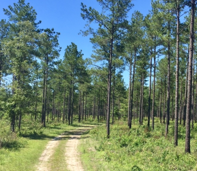 Blakely Timber and Hunting Tract in Early County, GA