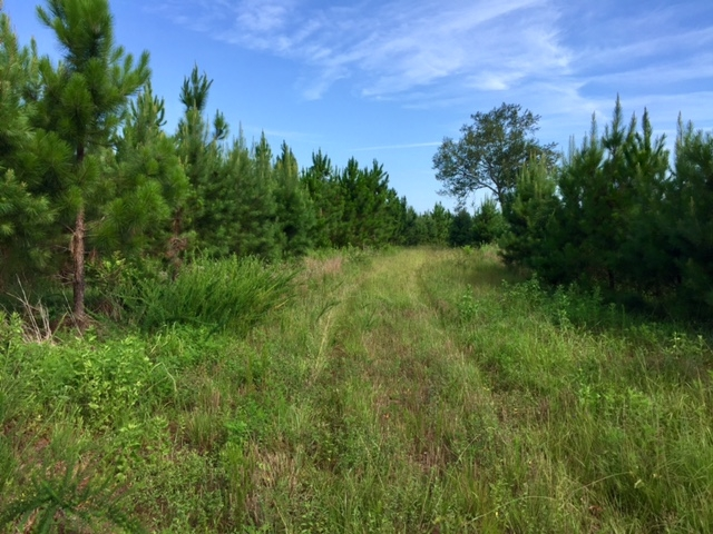 Buena Vista Hunting and Timber in Marion County, GA