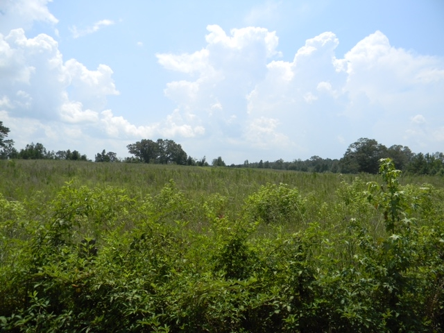 Bailey Springs Farm & Recreation Tract in Calhoun County, AL