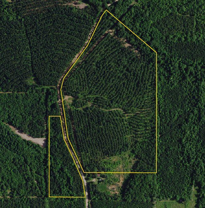 Chambers County Timber Investment