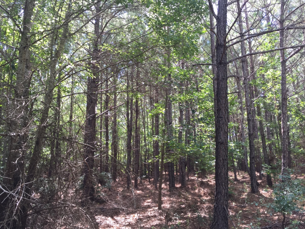 Marshall Road Homesite or Hunting Tract in Elmore County, AL