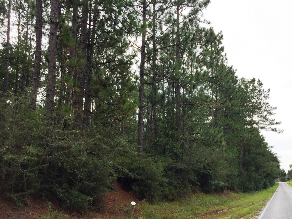 Timberland Investment Tract near Poplarville