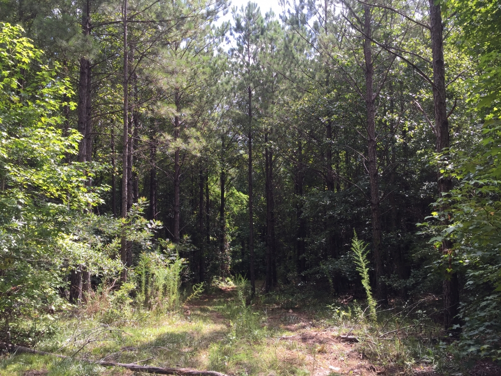 China Grove Homesite