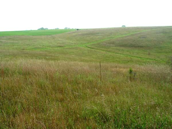 Cropland & Grass For Sale - Cheyenne County, CO in Cheyenne County, CO