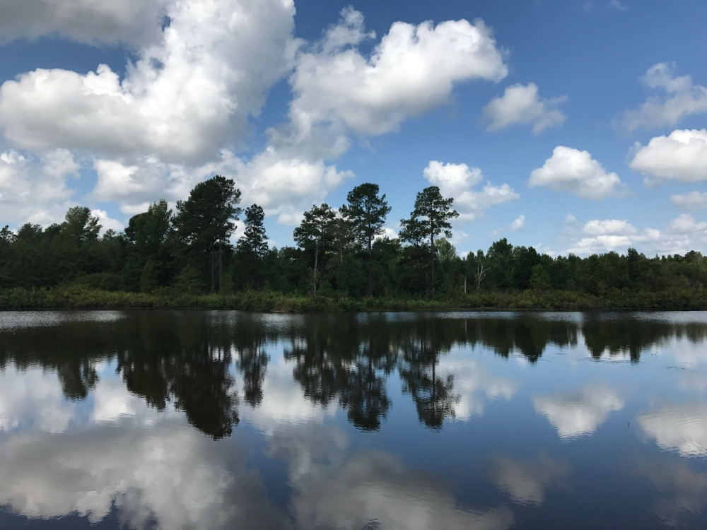 Johnson County Ag Field, Pond & Hunting Tract in Johnson County, GA