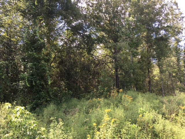 Talladega Timber, Commercial & Home Site Tract