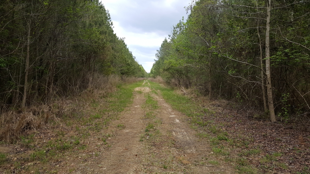 Pender County Hunting Land