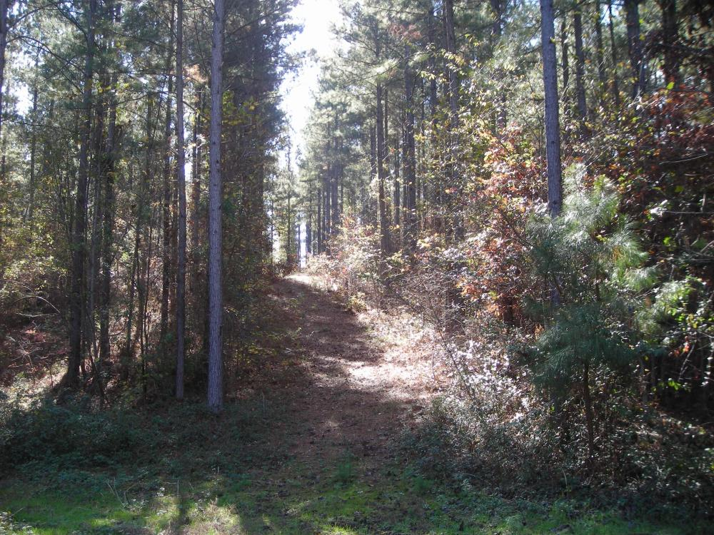NW Polk Co. Timber Tract (36 Acres) in Polk County, GA