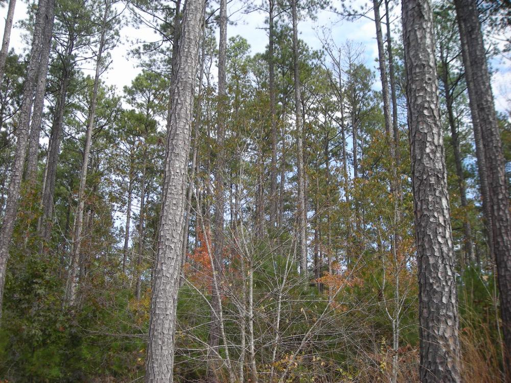 Judd Road Timber Tract (32 Acres) in Haralson County, GA