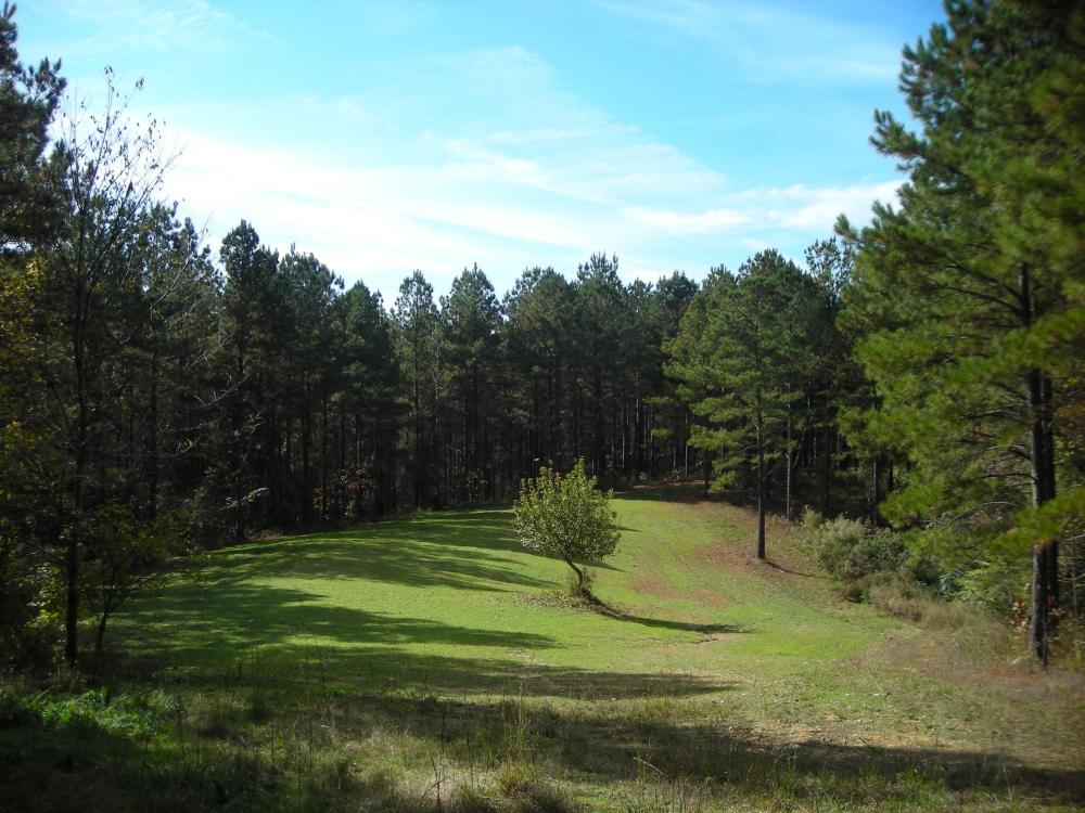James Wood Rd Timber Tract (80.75 Acres) in Haralson County, GA