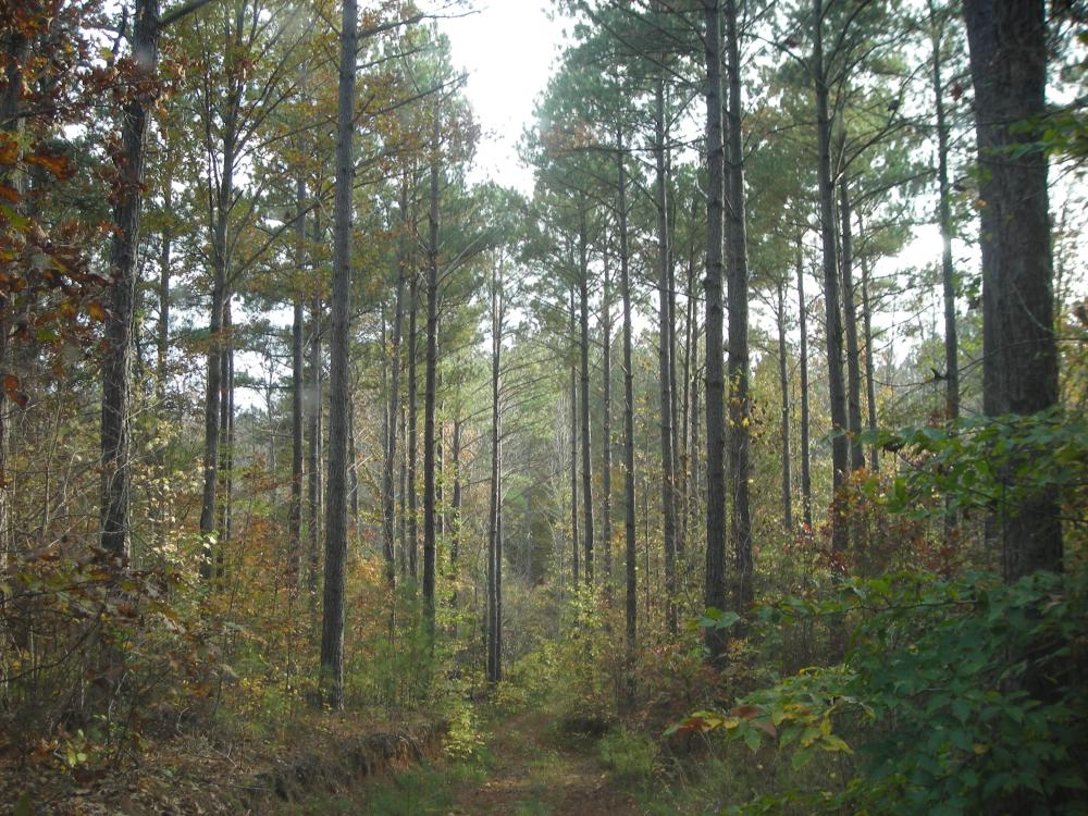 Blue Road Timber Tract (150 Acres) in Haralson County, GA