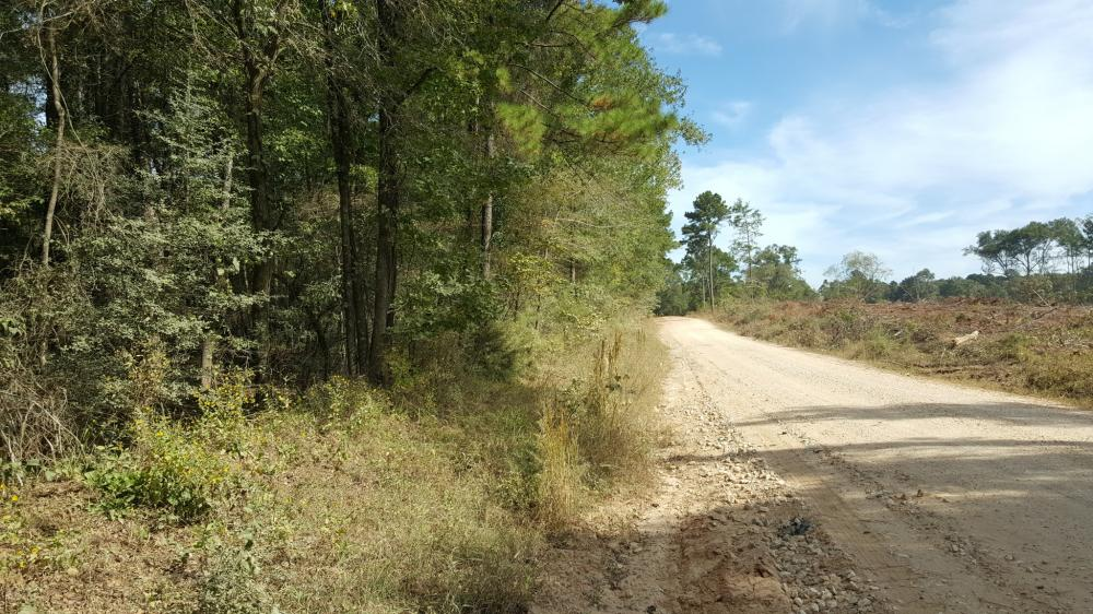 22 Acre Recreational and Hunting Property