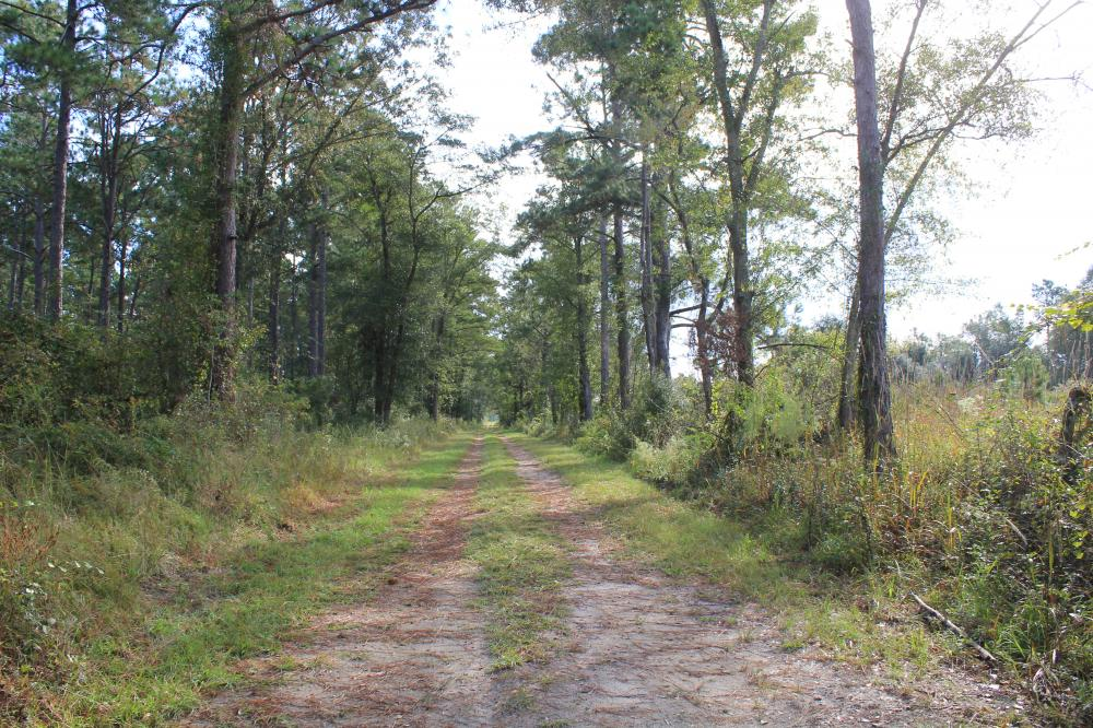 Pineville Recreation 100 Acres