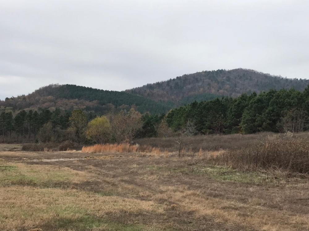 516+/- Acres Timberland Adjacent to Ouachita National Forest