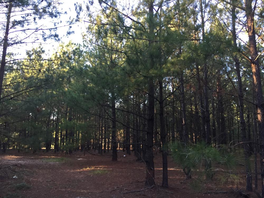 Springvale Road Recreation and Hunting with Homesite in Kershaw County, SC