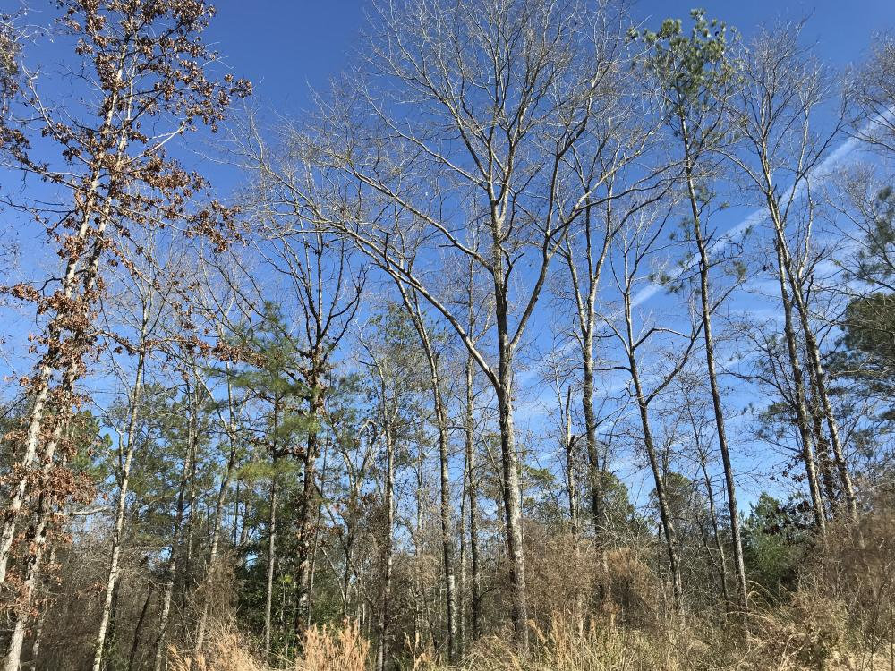 Gulfcrest Road Longleaf Timber and Hunting Investment