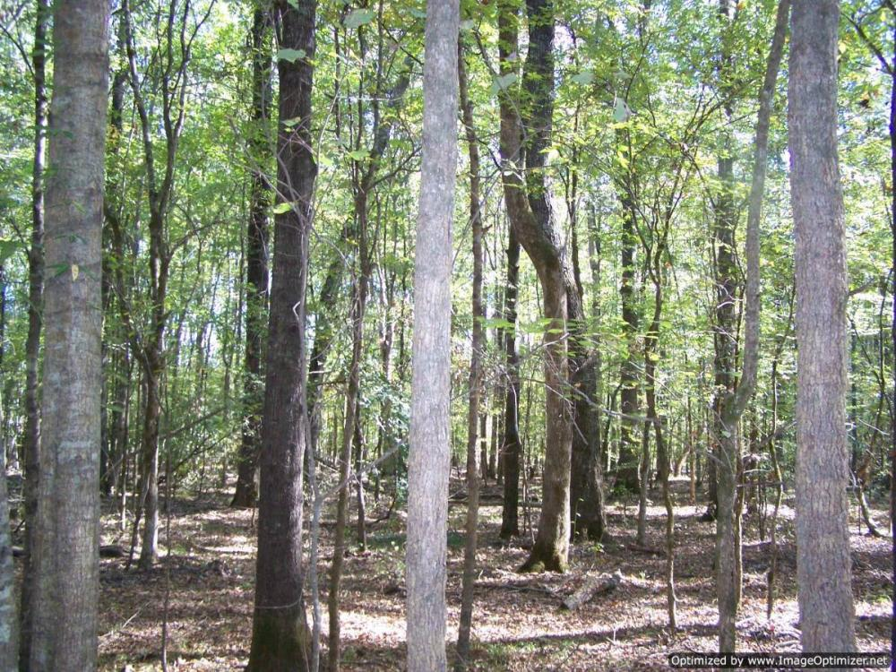 River hunting and timber investment with great access in Attala County, MS
