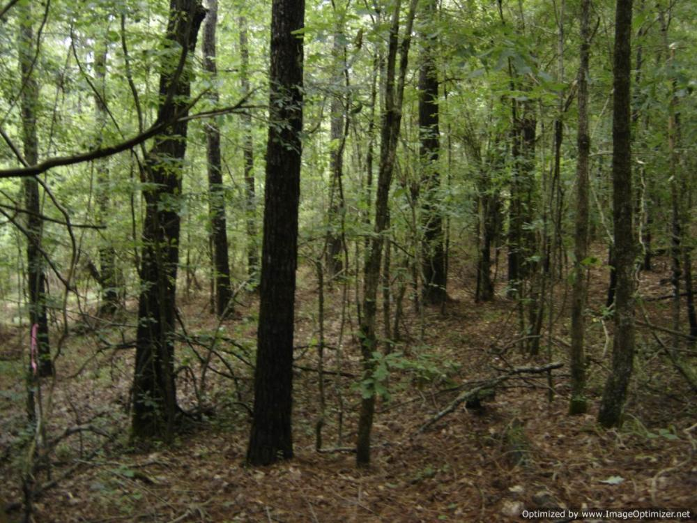 20 acres Hunting & Timber Tract near Vaiden, MS