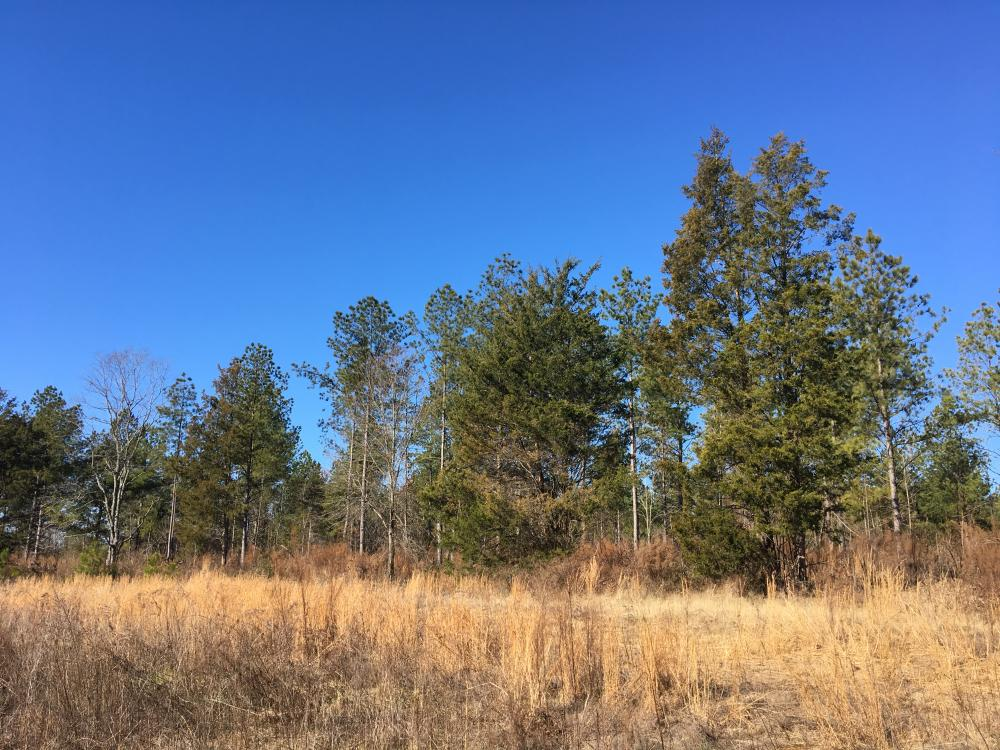 Country Homesite with Creek in Spartanburg County, SC