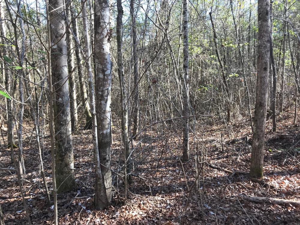 US 43 Hunting and Timber Investment