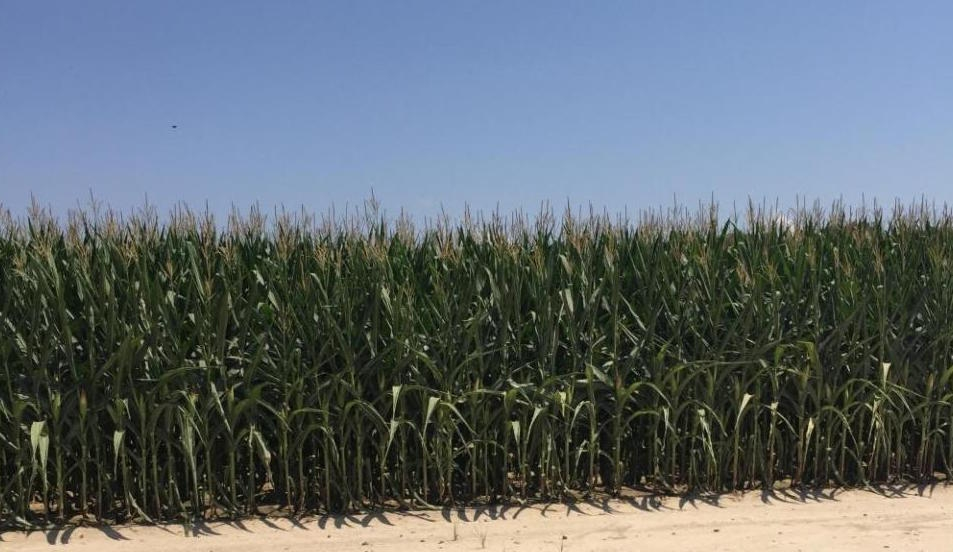 674+/- Row Crop Farm & Grain Bins in White County, AR