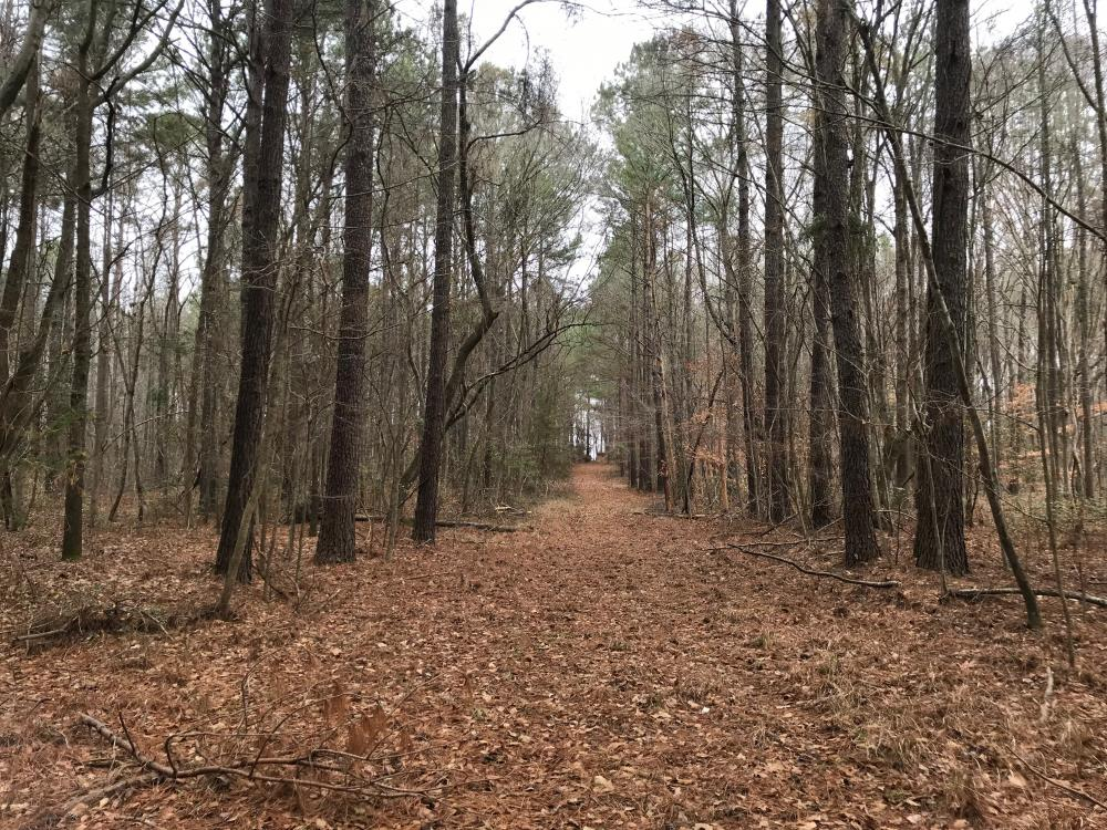 Mercer Mill Hunting Land with Timber in Bladen County, NC